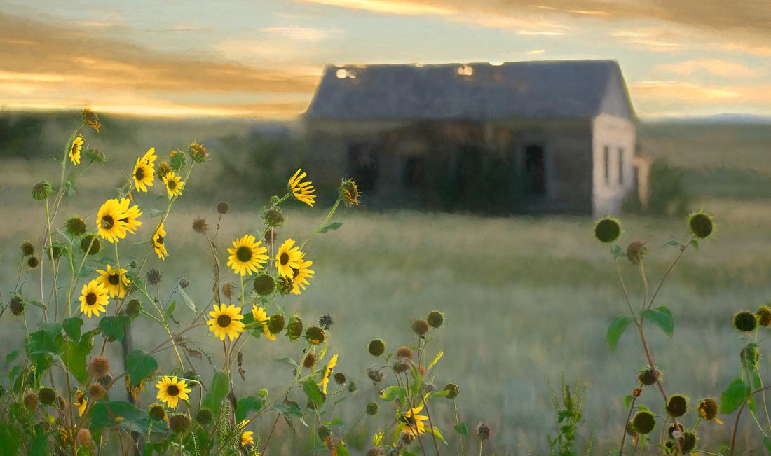 Abandoned homestead, Elbert, Colorado
